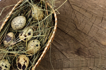 Quail eggs in a basket with hay