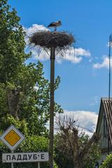 Stork in the nest against the blue sky