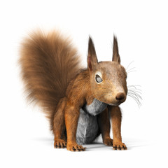 Red squirrel or Eurasian red squirrel,looking towards the camera, standing on a isolated white background. 3d rendering