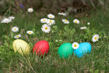Easter eggs ina garden
