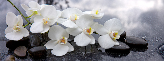 Tuinposter Orchidee White orchid and black stones close up.