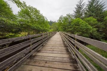 A bridge in the fairy green forest. Amazing forest of sequoia. Redwood national and state parks. California, USA
