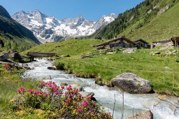Almhütten mit Gebirgsbach Alpenrosen und Gletscher im Hintergrund