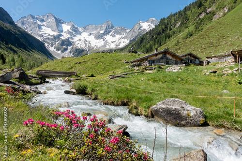 Fototapete Almhütten mit Gebirgsbach Alpenrosen und Gletscher im Hintergrund