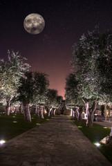Weg durch Garten bei sternenklarer Nacht mit Mond in Luxus Resort in Lecce, Italien