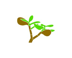 plant, tree, Crassula ovata, Jade Tree