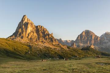 Some cows resting by Pass Giau, Trentino Alto Adige, Dolomites.