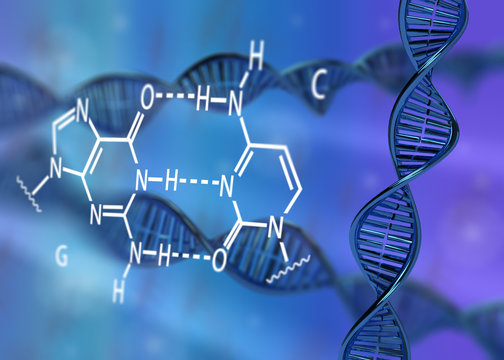 DNA molecule double helix GC base pair 3D rendering