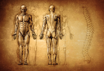 human anatomy drawing, old, canvas