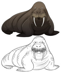 Animal outline for walrus