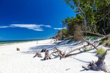 Plaża pod Łebą
