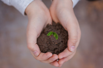Kid holding new sprout in hands. Symbol of new life and ecology concept.