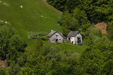 La natura dell'alta Valle Vigezzo, Valle Ossola, Verbania, Piemonte, Italia