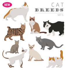 Cat breeds icon set flat style isolated on white. Create own infographic about pets