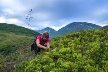 Heidelbeeren in Norwegen geniessen
