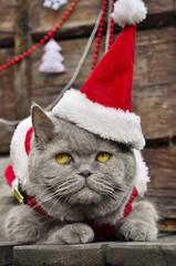 The cat in the hat Santa