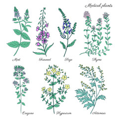 Set of medical plants Mint, Chamerion, fireweed, willow herb, Sage, Thyme, Oregano, Hypericum, Artemisia absinthium, wormwood hand drawn vintage sketch vector isolated on white, Doodle Healing herb