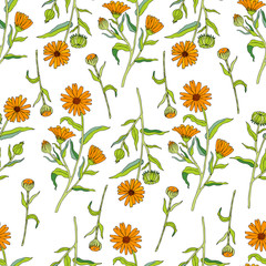 Seamless floral pattern, Calendula flower isolated on white background, botanical hand drawn doodle vector illustration marigold for design package tea, cosmetic, greeting cards, wedding invitation