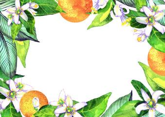 .Frame for A4. Blooming orange. Flowers neroli. watercolor orange.