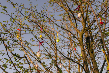 Easter eggs hung in the branches of the tree