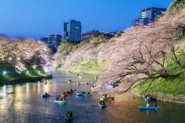 Night view of massive cherry blossoming in Tokyo, Japan as background. Photoed at Chidorigafuchi, Tokyo, Japan.