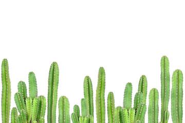 Photo sur Aluminium Cactus Cactus on isolated background