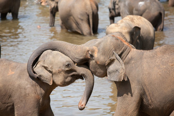 Elephant embraces a baby elephant