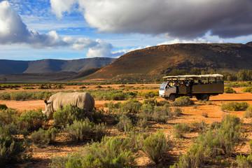 Safari truck and wildlife rhino in Western Cape South Africa