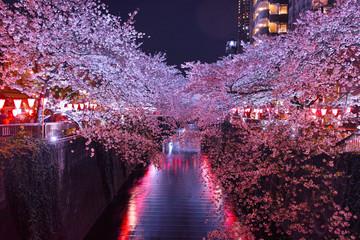 Poster Bordeaux 目黒川の夜桜