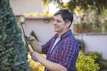 Middle age man gardener trimming and landscaping trees with shcars