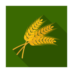 Sprigs of wheat. Plant for brewing beer. Pub single icon in flat style vector symbol stock illustration.