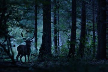 Poster de jardin Cerf Night forest landscape with deer