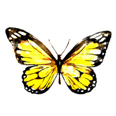 yellow butterfly,watercolor,isolated on a white
