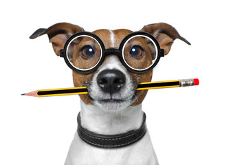 dog with pencil at the office