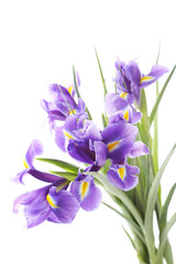 Deurstickers Iris Bouquet of iris flowers isolated on a white