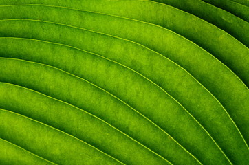 Tropical leaf abstract background
