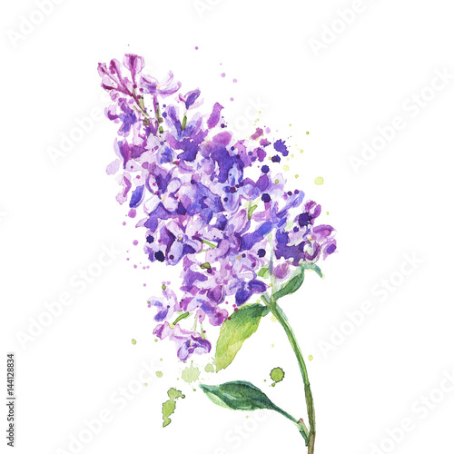 Lilac flowers isolated on a white background watercolor painting lilac flowers isolated on a white background watercolor painting mightylinksfo