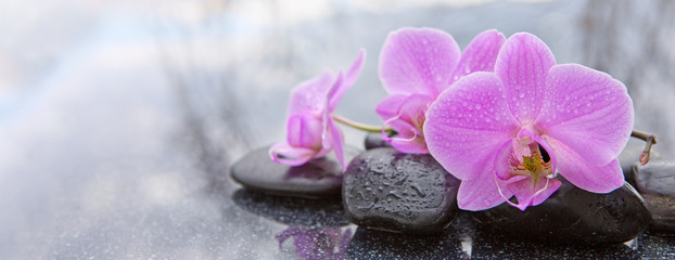 Spoed Foto op Canvas Orchidee Pink orchid and basalt stones on the black background.