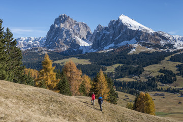 Alpe di Siusi/Seiser Alm, Dolomites, South Tyrol, Italy. Autumn colors on the Alpe di Siusi/Seiser Alm with the Sassolungo/Langkofel and the Sassopiatto/Plattkofel in background