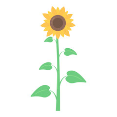 Vector cartoon sunflower
