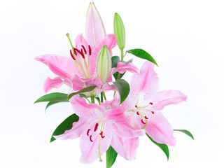 Pink lilies bunch isolated on white background.