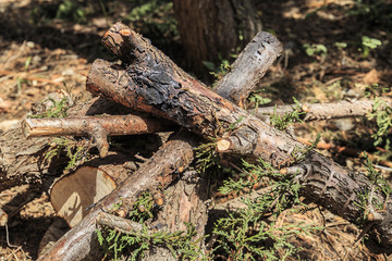 Bonfire wood