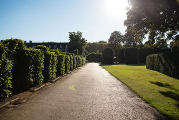 Pathway in Garden