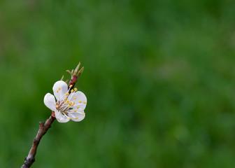 flowering trees in the spring