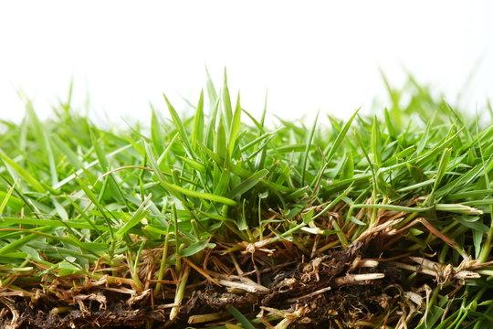 Grass detail background concept.