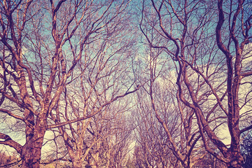 Plane trees alley, retro stylized picture