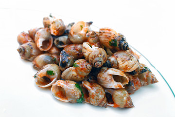 Sea snails isolated