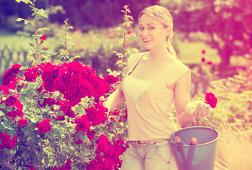 Blond woman taking care of red rose bushes