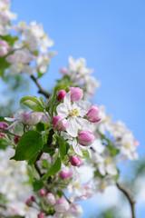 Frühling 430