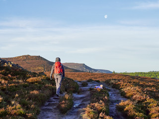 A hiker and their dog walking in the Northumberland countryside, Simonside near Rothbury, England, UK.